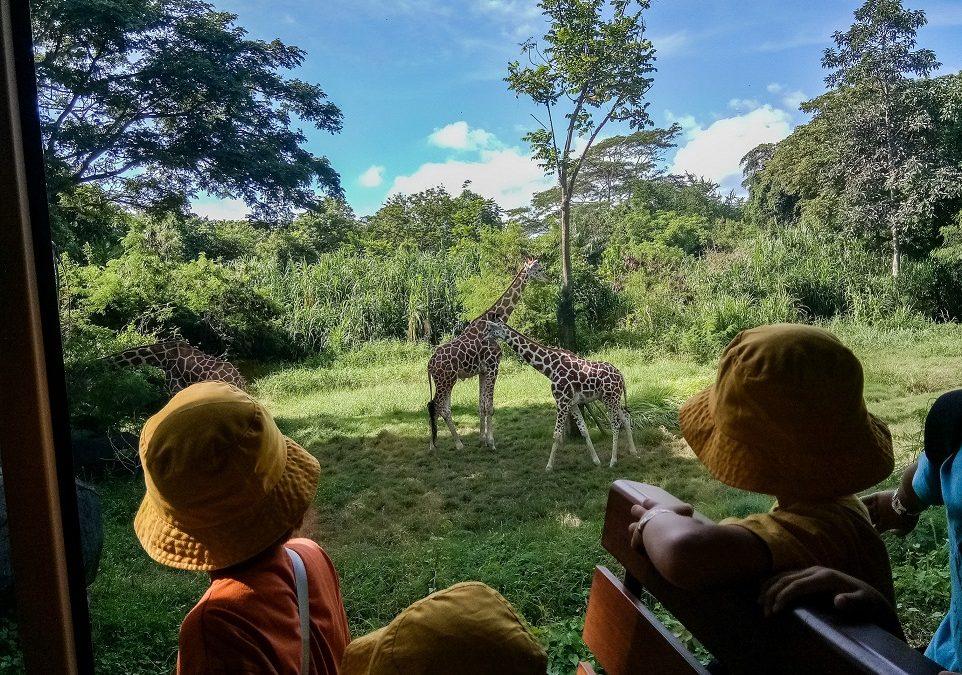 TK B Field Trip to Bali Safari & Marine Park