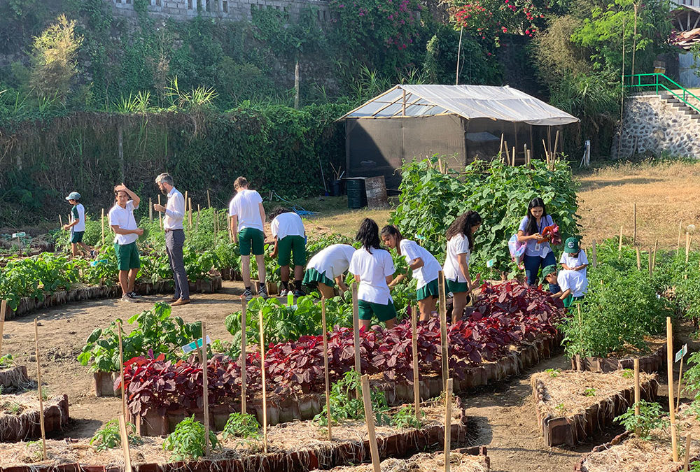 The Community Garden is now up and running!