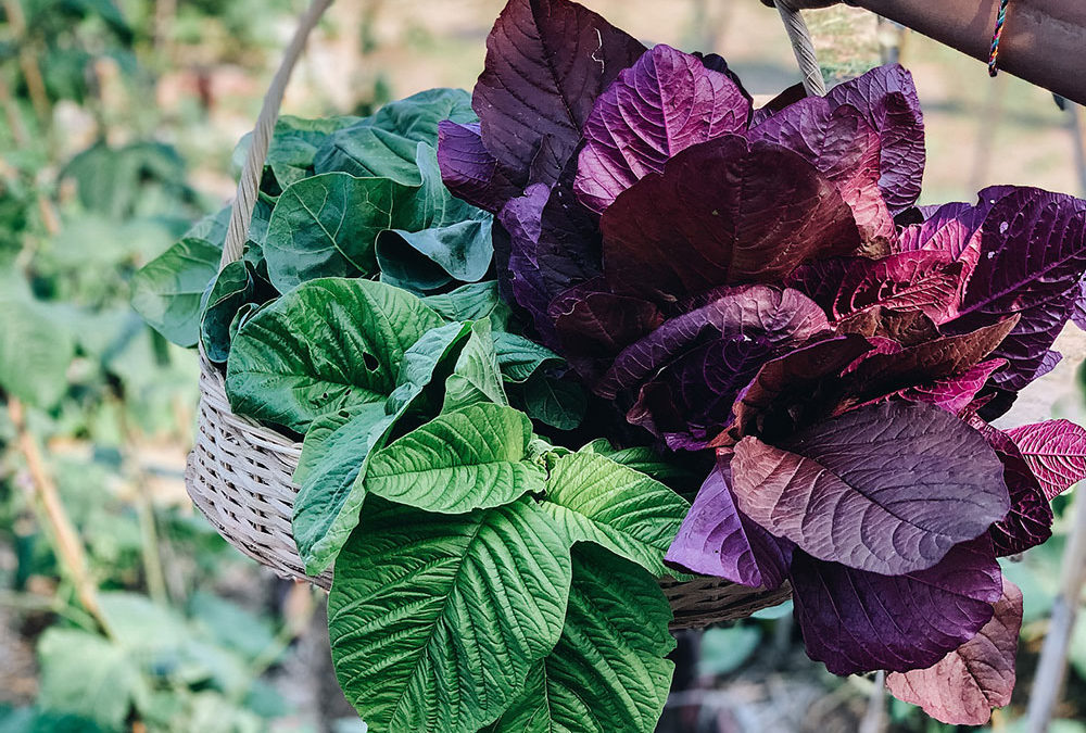 Dyatmika Community Garden – A Call For Recipes