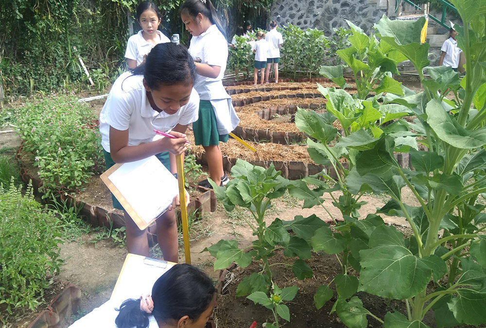 Class 6 and the Sunflowers